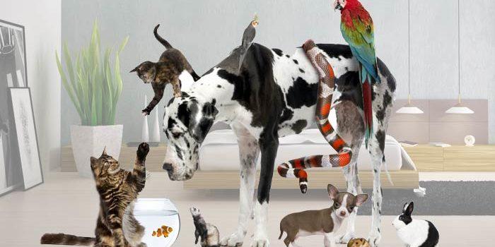 Thème astral - Votre animal de compagnie